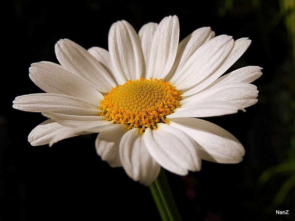 Photo in Macro #flower #nature #shine #macro #spring