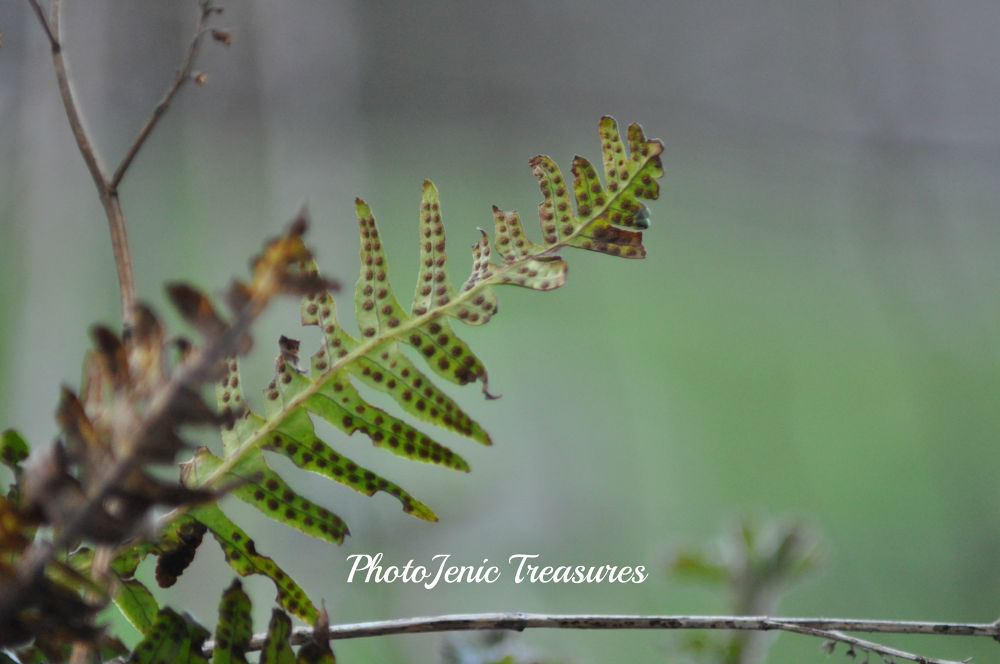 Photo in Nature #fern #green #nature #photojenic #treasures #forest