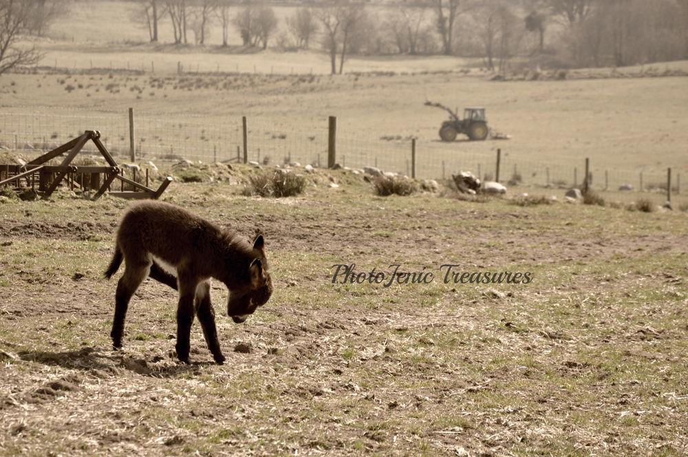Photo in Animal #donkey #animal #farm #cumbria #photojenic #treasures #country #life