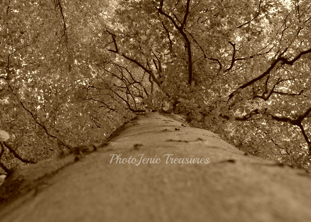 Photo in Nature #up #sepia #photojenic #treasures #cumbria #tree #forest