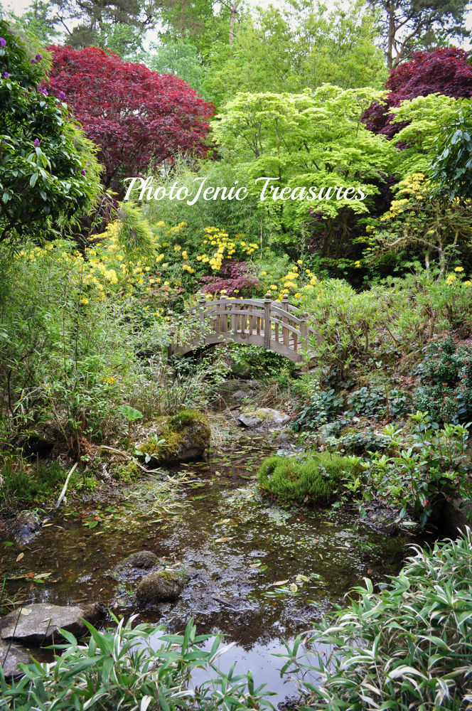 Photo in Landscape #japanese #garden #flowers #cumbria #photojenic #treasures #pretty #forest #water