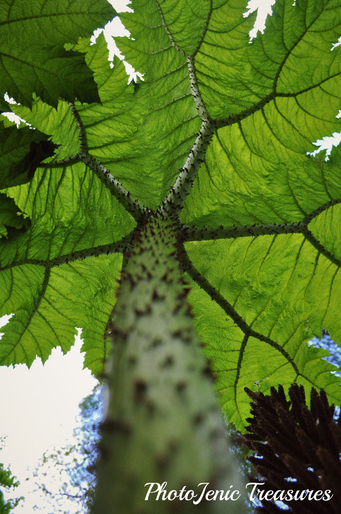 Photo in Nature #gunnera #photojenic treasures #tree #garden #forest #nature