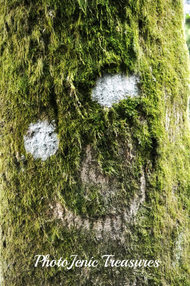 Photo in Random #smile #happy #tree #random #:) #photojenic treasures