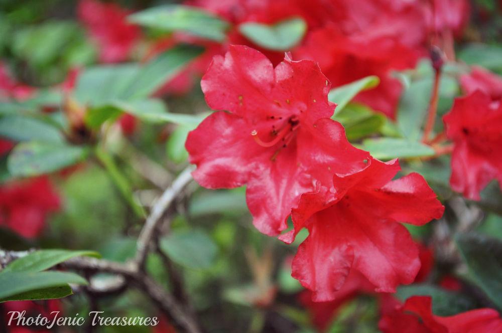 Photo in Nature #red #flower #photojenic treasures #pretty #garden