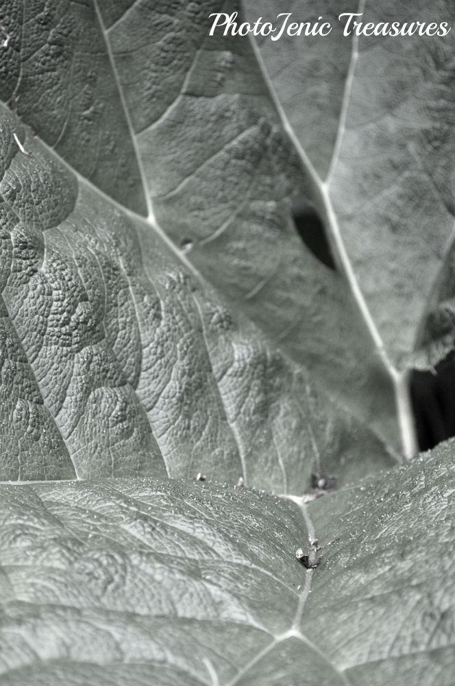 Photo in Macro #leaf #leaves #black and white #macro #photojenic treasures