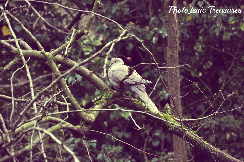 Photo in Random #woodcock #bird #animal #photojenic treasures #tree #zoo