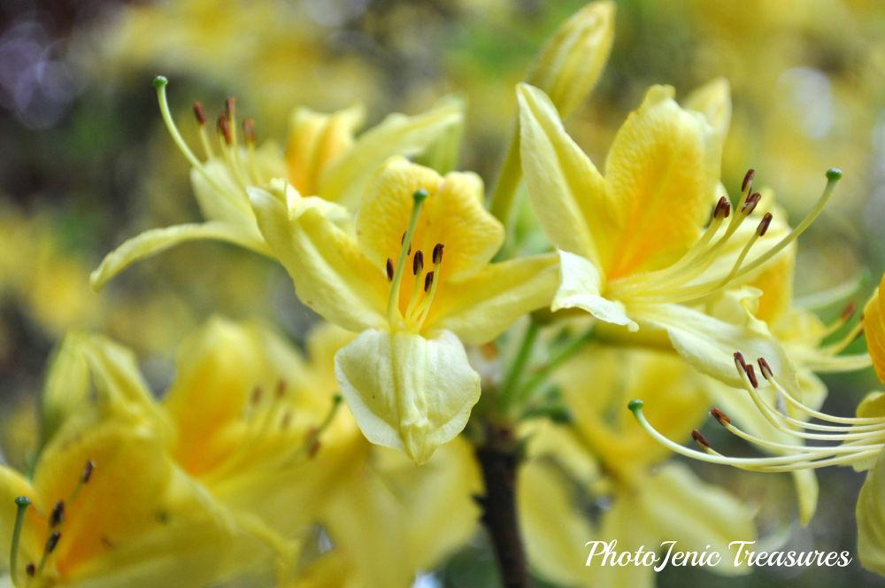 Photo in Nature #yellow #flower #photojenic treasures