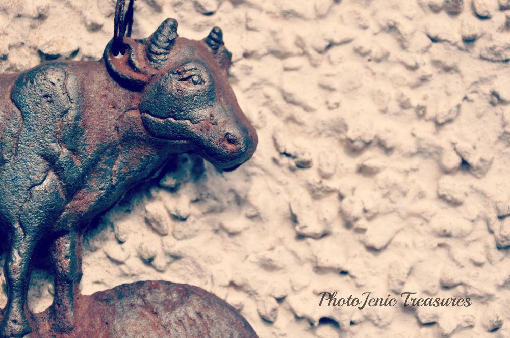Photo in Random #cow #iron #photojenic treasures #fun