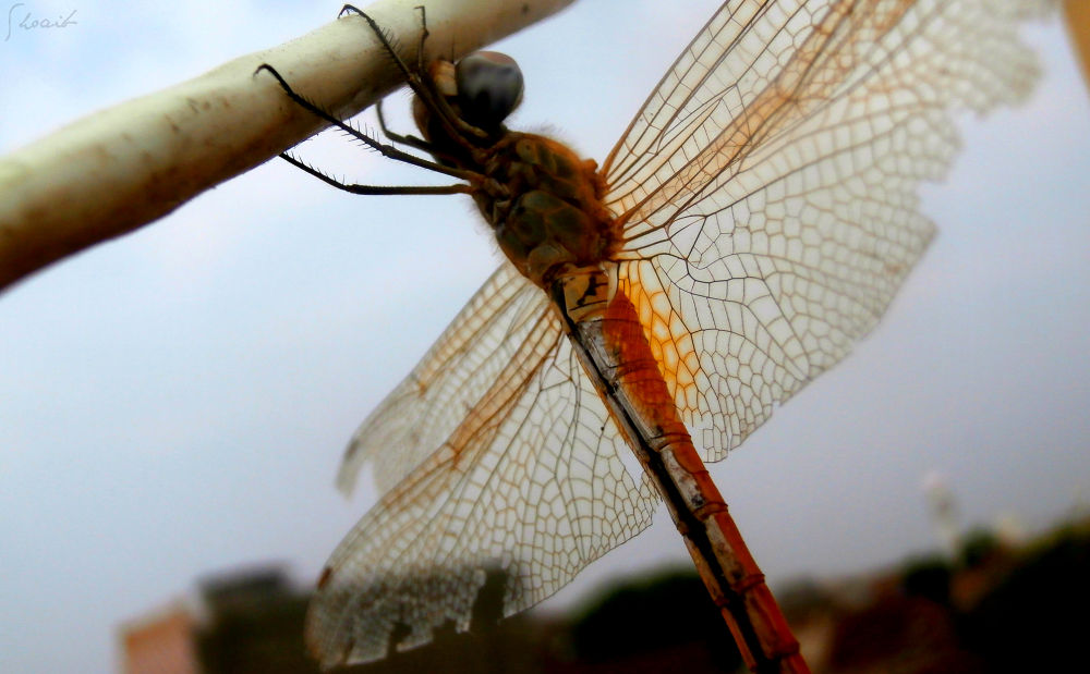 Photo in Macro #alive dragonfly