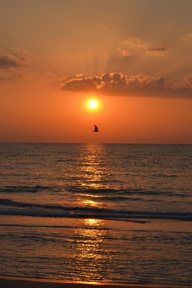Photo in Sea and Sand #sunset #clearwater beach #gulf of mexico #gulf of mexico sunset #clearwater beach sunset #beach sunset