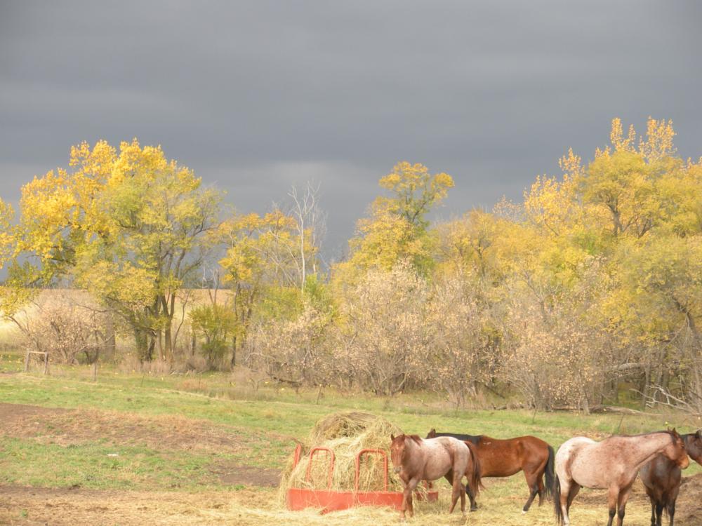Photo in Landscape #clouds #fall #north dakota
