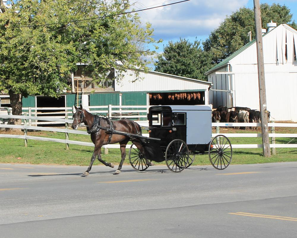 Photo in Travel #amish #horse drawn carriage #farms