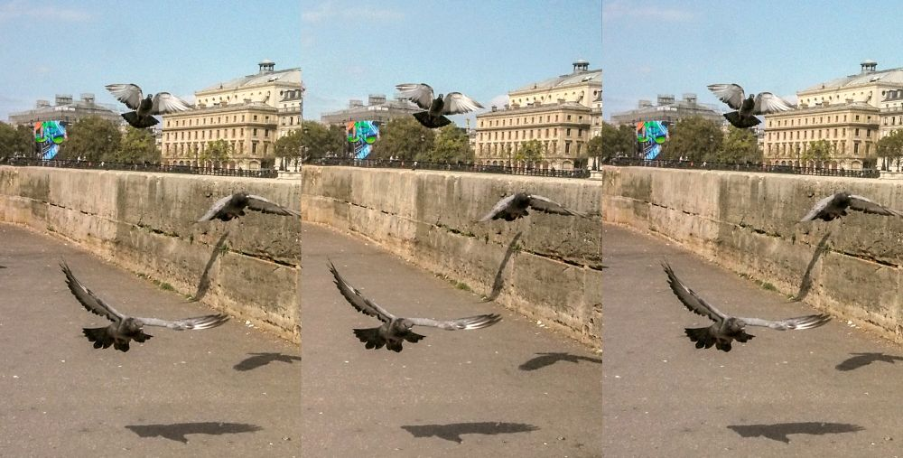 Photo in Nature #pigeons #paris #stereoscopy