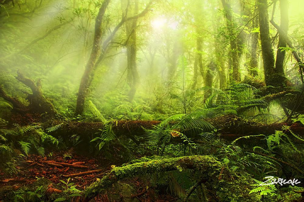 Photo in Landscape #devil's mountain #mt cristobal #cristobal #mountain #mountain climbing #enchanted forest #zernan mataya #landscape #beautiful landscape