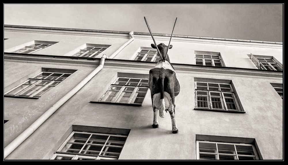 Photo in Architecture #cow #architecture #window #vilniaus #lithuania