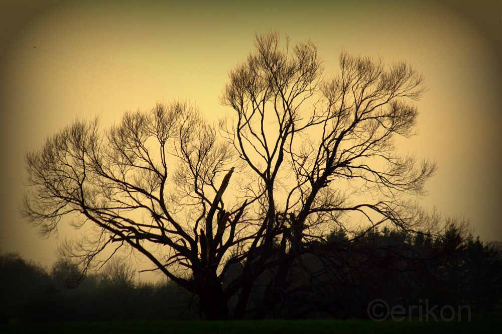 Photo in Random #silhouette #tree #afternoon