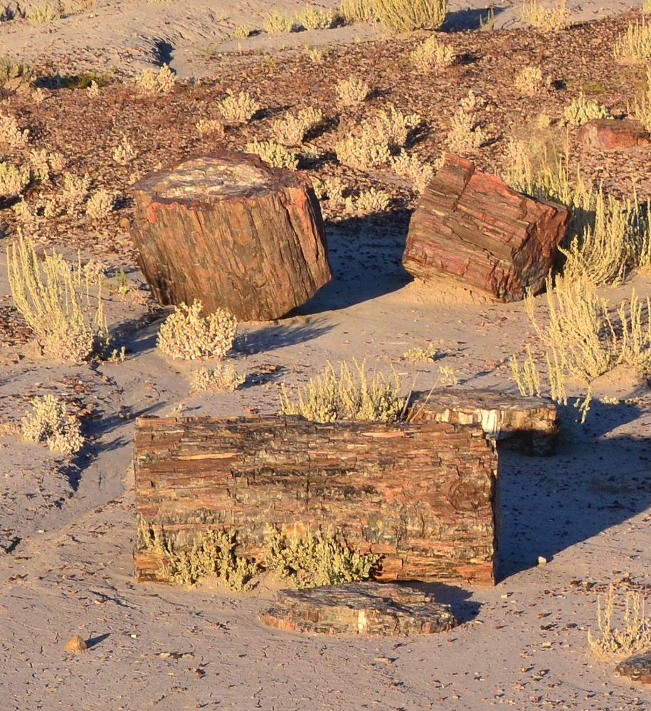 Photo in Landscape #landscape #nature #petrified forest #arizona