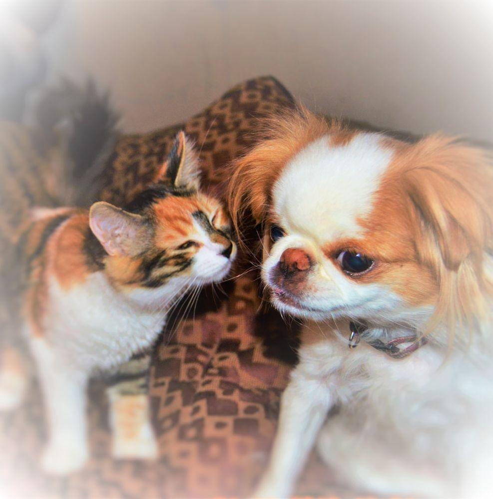 Photo in Animal #animal #dog #cat #pets