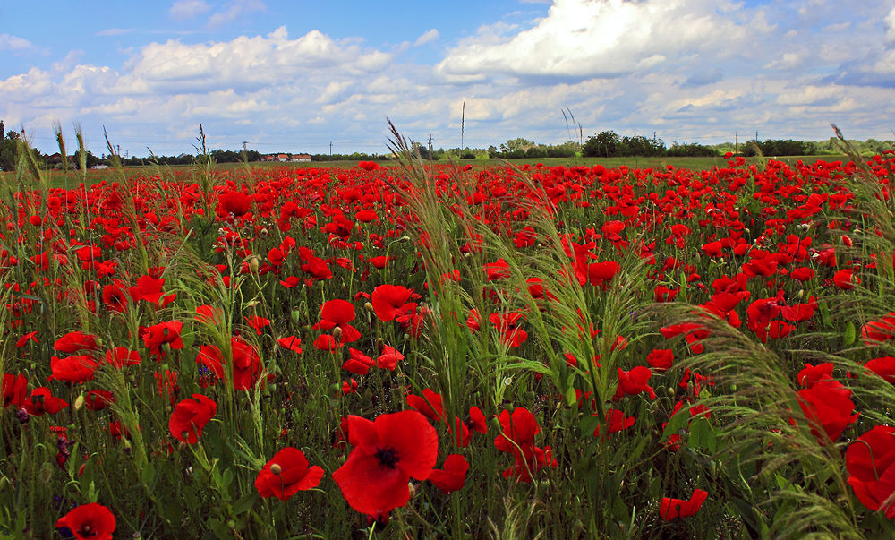 Photo in Nature #mező #piros