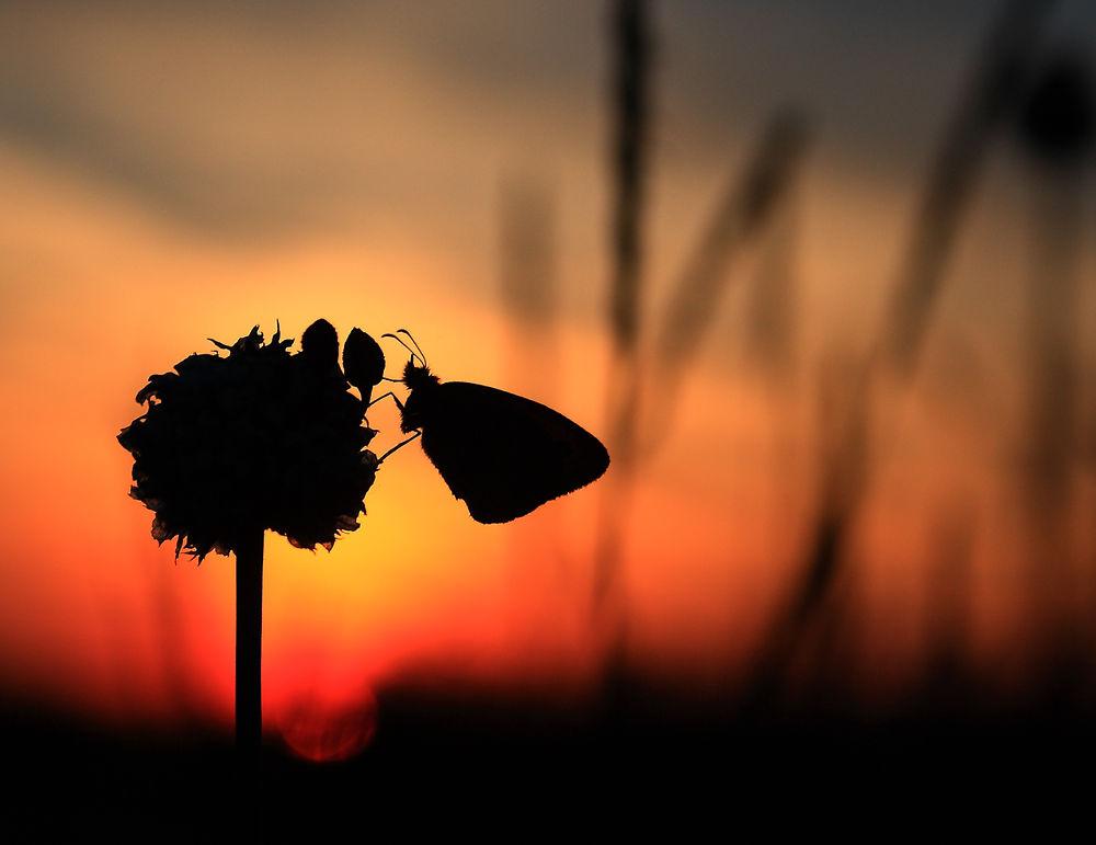 Photo in Random #sziluett #lepke #naplemente