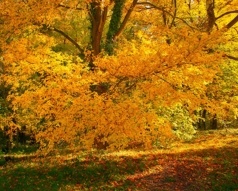 Photo in Nature #arborétum természet fa ősz hun