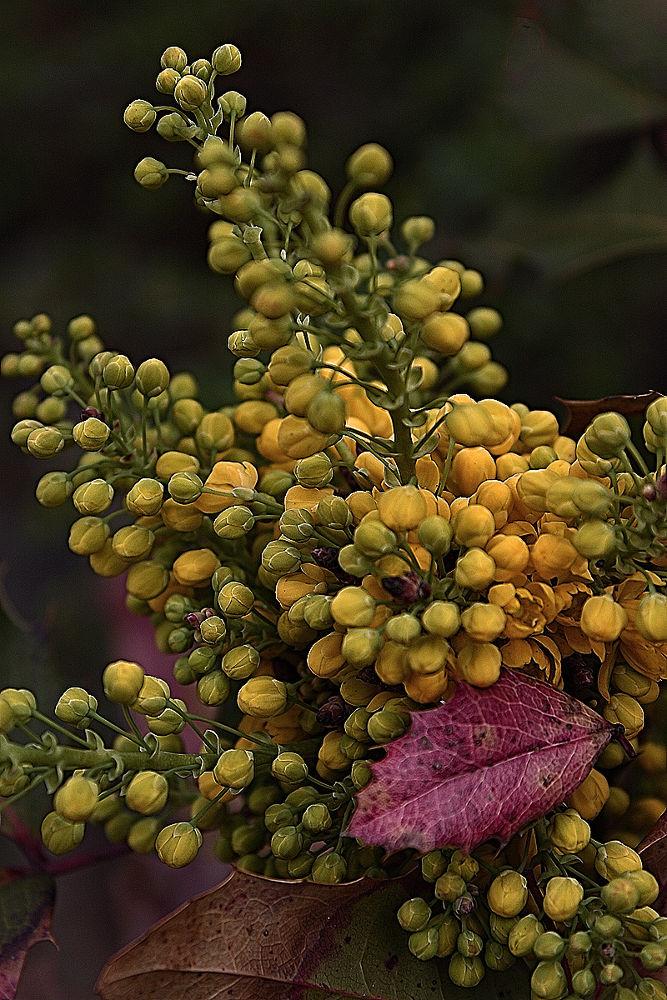 Photo in Nature #növény természet