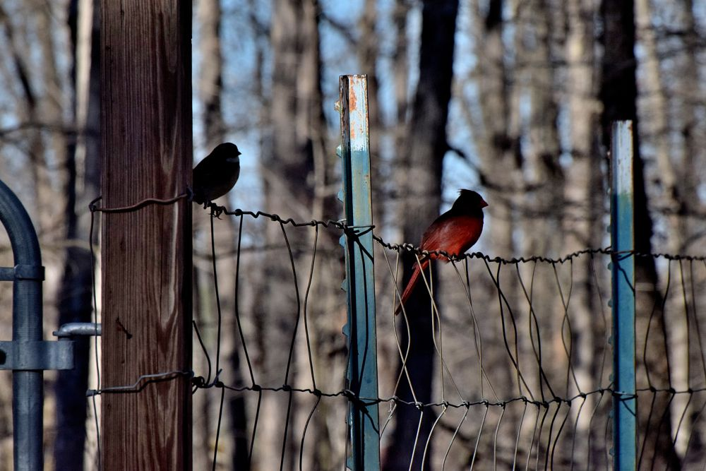 Photo in Nature #birds #pretty birds #silhouettes #fence #nature