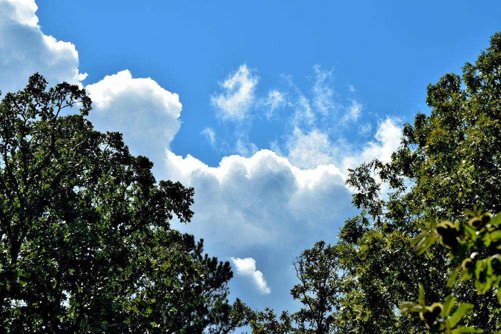 Photo in Nature #trees #clouds #silhouettes #sky #blue sky #oak trees #nature #arkansawhillbilly #google me: lawrence scott hess