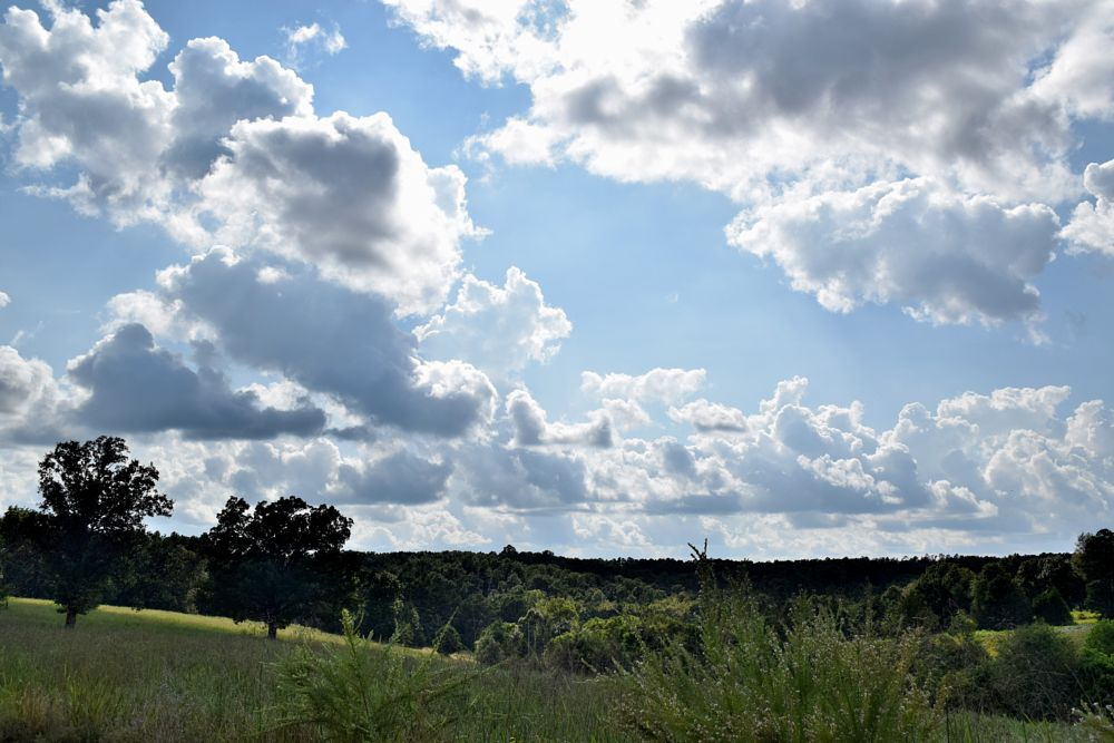 Photo in Landscape #cloud #clouds #puffy clouds #dark clouds #sky #trees #landscapes #nature #arkansawhillbilly #google me: lawrence scott hess
