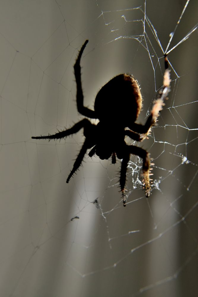 Photo in Nature #bugs #insects #spider #spiders #webs #nature #silk #arkansawhillbilly #google me: lawrence scott hess