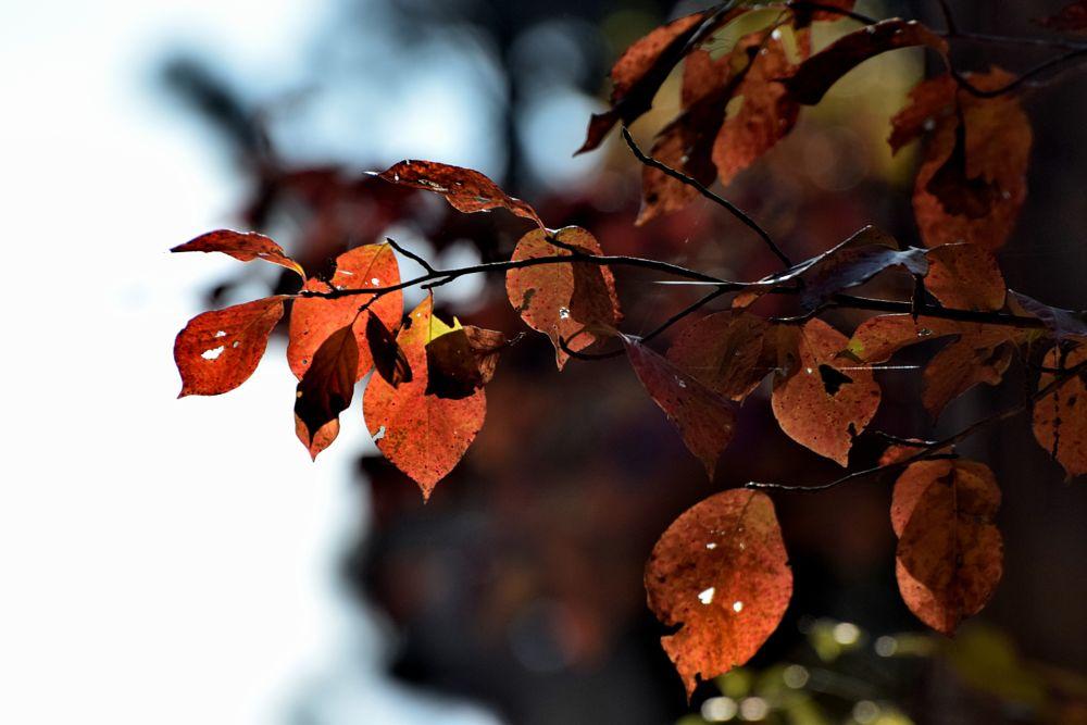 Photo in Nature #leaves #autumn #nature #fall #arkansawhillbilly #google me: lawrence scott hess