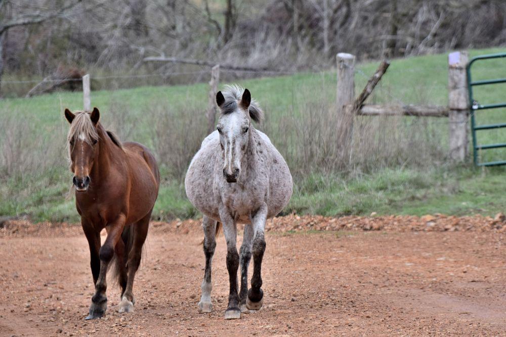 Photo in Animal #animals #horses #pets