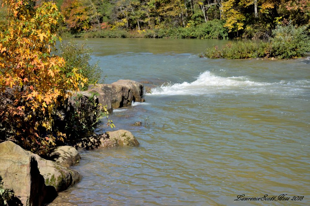 Photo in Nature #water #buffalo national river #trees #leaves #autumn #fall colors #fall #nature