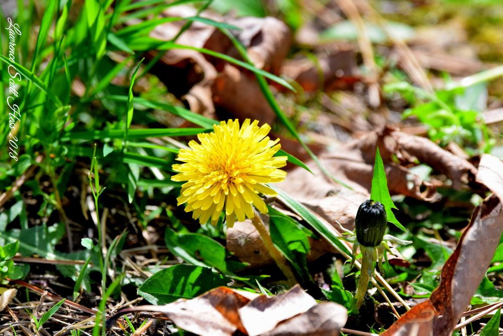 Photo in Nature #weeds #leaves #wildflowers #nature