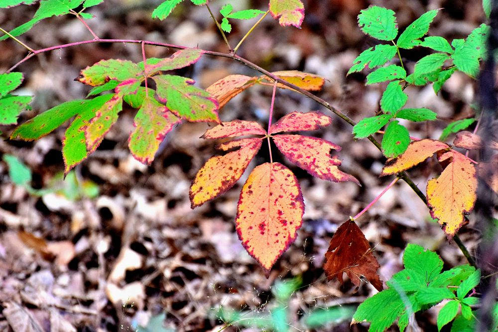 Photo in Nature #leaves #fall #autumn #colored leaves #leaf art #nature
