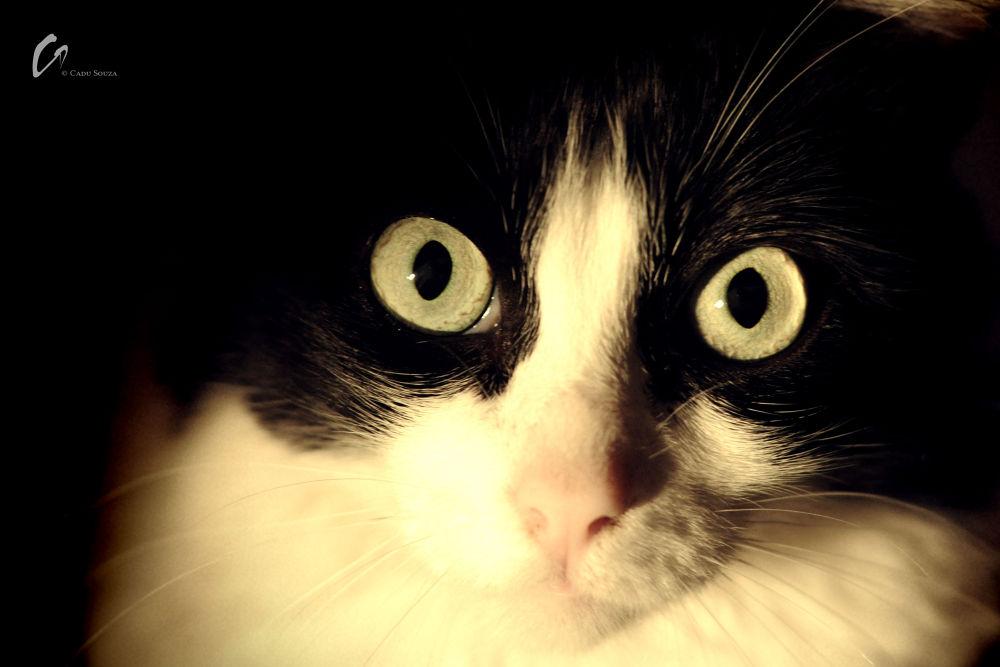 Photo in Animal #cat #eye