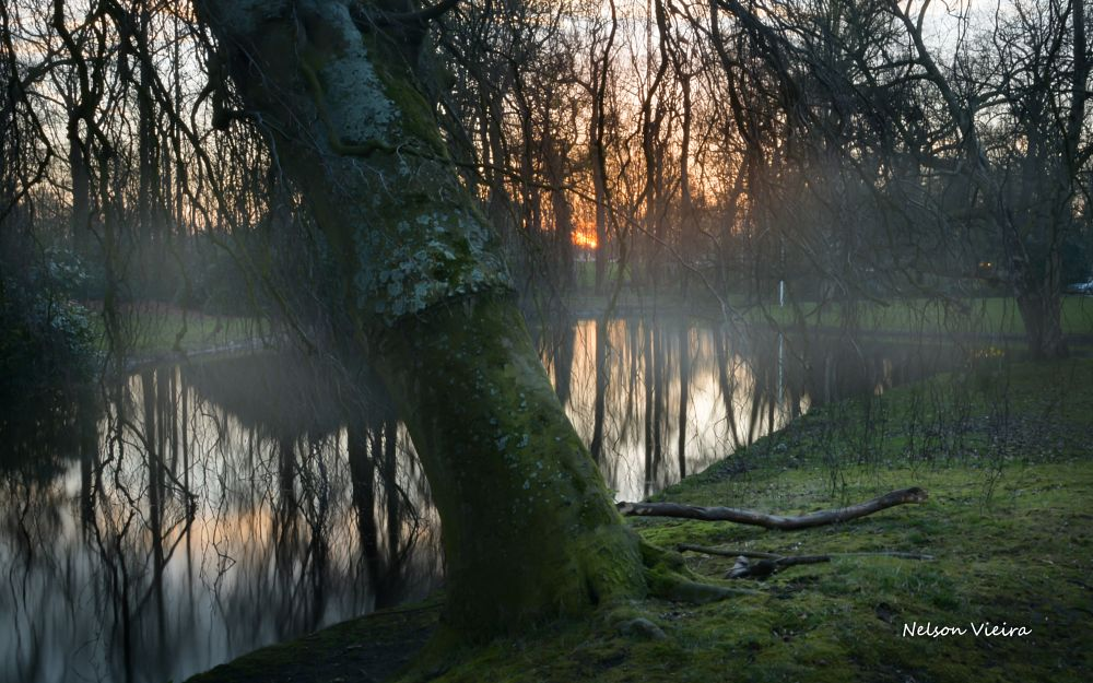Photo in Landscape #woods #forest #tree #sunset #sun #lake #holland #netherlands #beauty