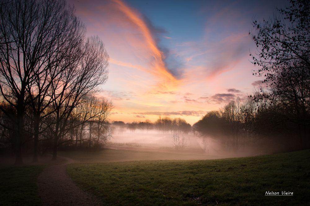 Photo in Landscape #sunrise #woods #beautiful #fog #misty #mistyland #sky #holland #netherlands