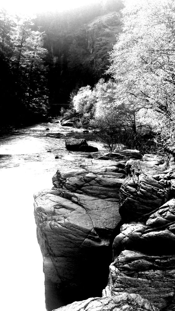 Photo in Black and White #nature #creek #contrast