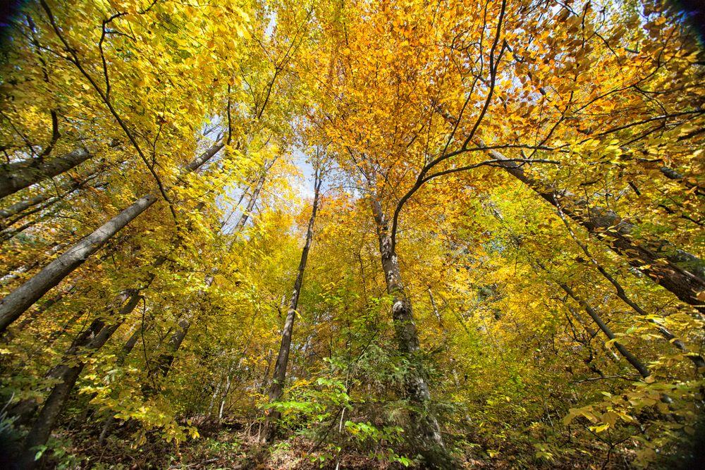 Photo in Nature #autumn #park #trees