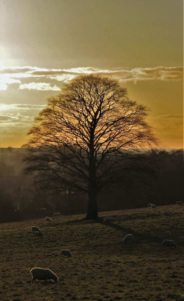 Photo in Landscape #nature #landscape #winter