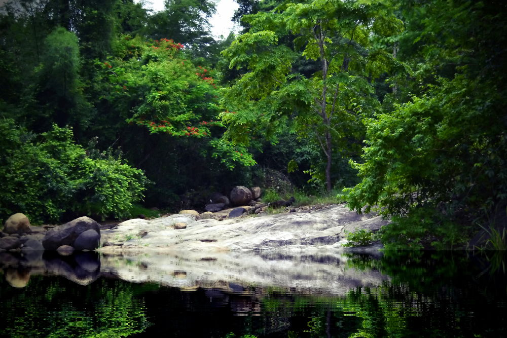 Photo in Nature #jungle #water falls #wild life sanctury #forest #trekking