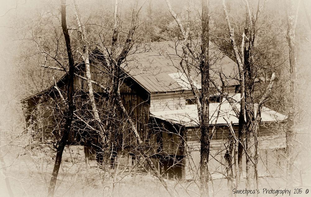 Photo in Rural #old #barn #brush #black&white #trees #@sweetpeasphotography