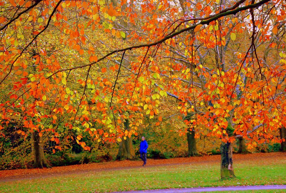 Photo in Nature #under #trees #canopy #autumn #walk #park #nature #colours #autumnleaves #shades #yellow #orange #green #brown #man #landscape #herfst #bomen #bladeren #kleuren #fall #foliage #jesen #jesenjelišće #jesenjipejzaž #pejzaž #priroda #boje #holland #denhaag #thehague #netherlands #natuur #landschap