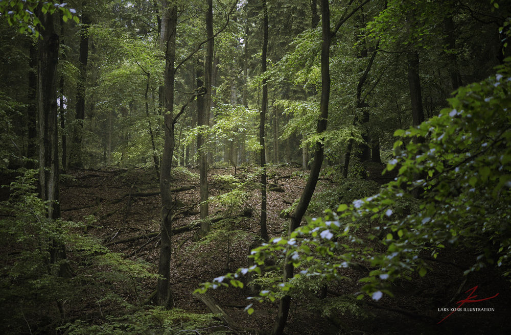 Photo in Nature #ypa2013 #woods #forest #nature #wildlife #trees #tree #beech #european #green
