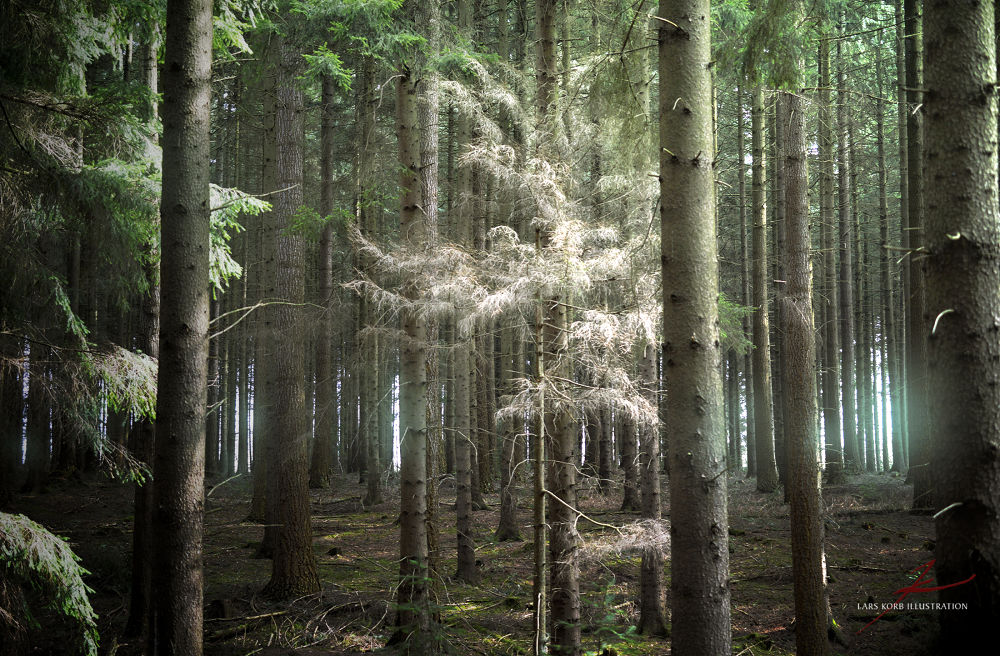 Photo in Random #ypa2013 #woods #nature #forest #trees #tree #conifers #germany #europe