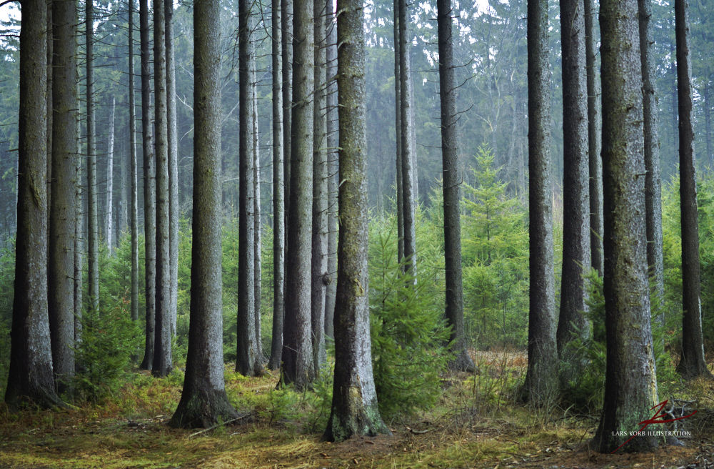 Photo in Random #ypa2013 #woods #forest #nature #trees #tree #conifers #europe #germany #wildlife
