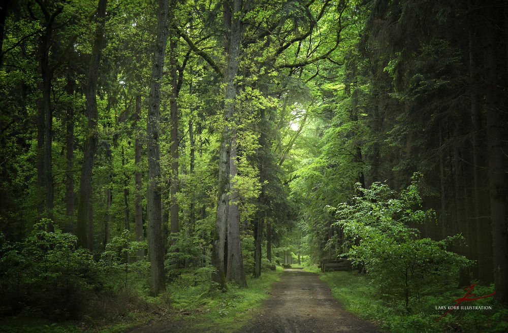 Photo in Random #ypa2013 #woods #forest #landscape #nature #trees #tree #mixed #oaks #beeches #green #seasons #summer #path #trail #germany #europe