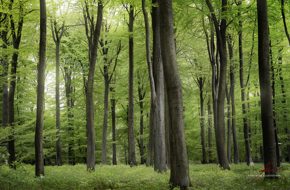 Photo in Random #ypa2013 #landscapes #nature #woods #forest #seasons #spring #green #growth #germany #europe #natural light