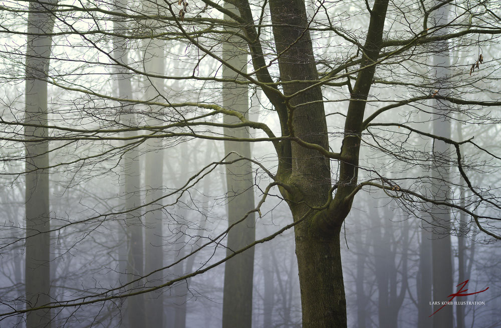 Photo in Random #ypa2013 #landscapes #nature #wildlife #woods #forest #trees #tree #seasons #winter #european #beeches #beech #mist #silence